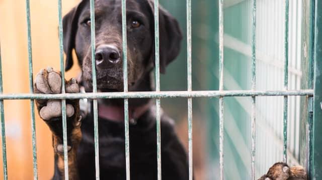 Tierschutzvereine haben in der Corona-Krise keine Aussicht auf Soforthilfe (Symbolbild).