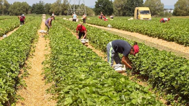 Von den insgesamt 33,4 Millionen sozialversicherungspflichtig beschäftigten Arbeitnehmern in Deutschland stammen knapp 4,2 Millionen aus dem Ausland. Eine der größten Gruppen sind die Polen mit 440.000 Arbeitskräften, gefolgt von den Rumänen mit knapp 390.000.