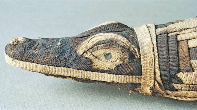 Das gab es in jedem gut sortierten Tempelshop: ägyptische Krokodilmumie aus dem  ersten oder zweiten  Jahrhundert nach Christus