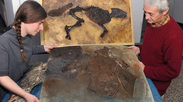 Blick ins Eozän: Die Präparatoren Mascha Siemund und Eric Milsom mit den beiden jüngsten Urpferd-Funden aus der Grube Messel