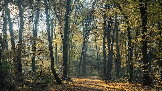 Die Tat geschah im Frankfurter Stadtwald nahe Schwanheim.