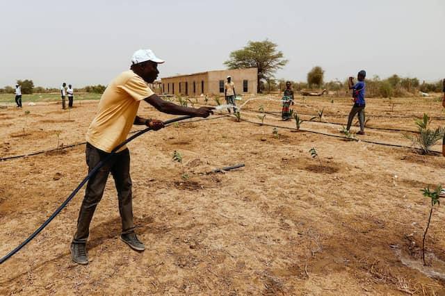 Aly Ndiaye ist Ingenieur für Landwirtschaft und Teil des Teams der Aufforstung.