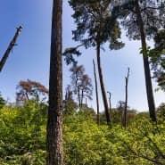 Geschunden: Frankfurts Stadtwald im Juli 2019