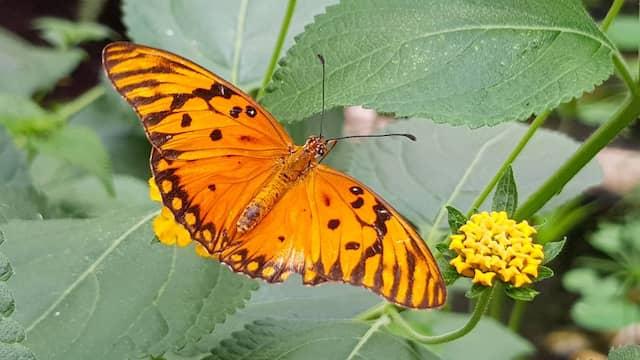 Den müssten Sie mal auf dem Bildschirm sehen. Im Vergleich dazu wirkt der Schmetterling geradezu blass.