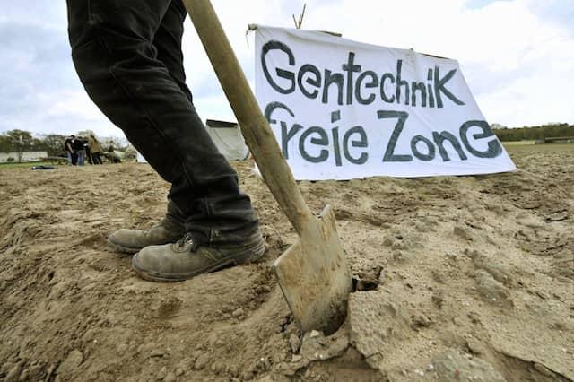 Ziel erreicht: Die Zerstörung von Feldern mit Genpflanzen zeigt Wirkung
