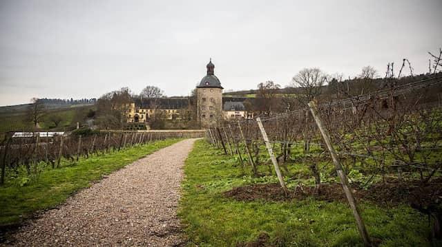 Blick aus der Ferne: Mit dem Jahrgang 2022 könnte Vollrads zum größten Bio-Weingut Hessens aufsteigen.