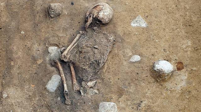 Bei Erdarbeiten für die Errichtung von Windkraftanlagen wurde das Skelett in der Uckermark entdeckt.