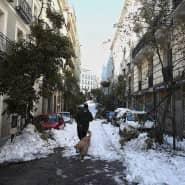 Die Bäume konnten den Schneemassen nicht standhalten: Nun plant Madrid fünf Prozent aller Bäume zu Fällen