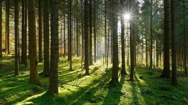 Wo Schatten fällt, muss irgendwo auch Licht sein.