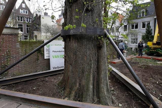 Vergangen: die mittlerweile gefällte Anne-Frank-Kastanie in Amsterdam, deren Ableger in Frankfurt nun von Unbekannten abgesägt worden ist