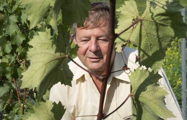 Mehr als 50 verschiedene Edelsorten wachsen am Institut für Rebenzüchtung. Joachim Schmid kennt sie alle.