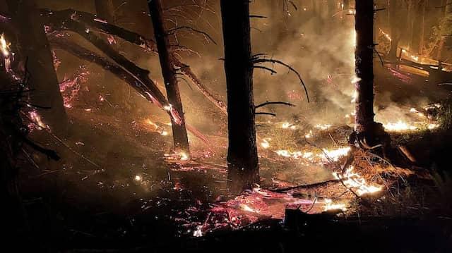 Es dauert lange, bis sich ein Wald nach einem Brand wieder erholt hat. Mikroorganismen helfen dabei.