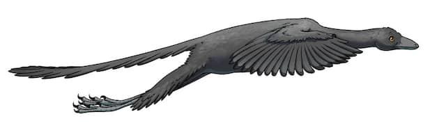 Diese Illustration zeigt Archaeopteryx im Flug