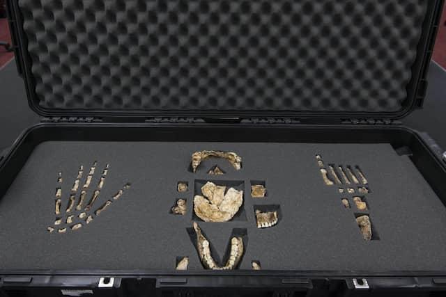 Wichtige Knochen des Homo-naledi-Fundes aus Südafrika.