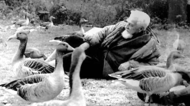 Seine Studien zum Verhalten der Graugänse machten ihn berühmt: Konrad Lorenz auf einem undatieten Foto.