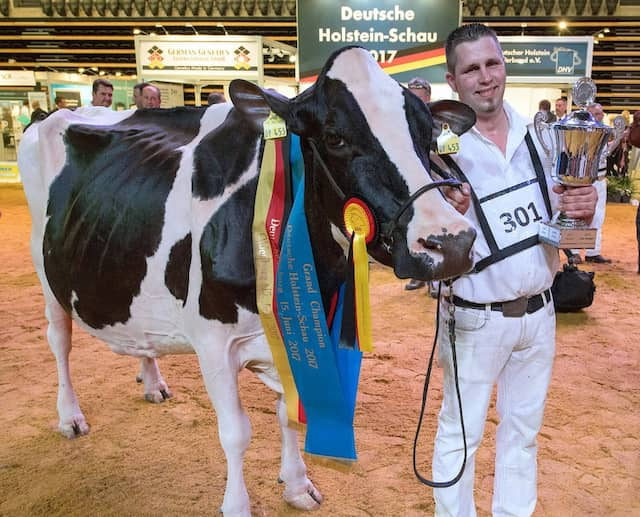 Wenn man die Schwarzbunten für die Krone der Schöpfung hält, was Rinderrassen angeht, dann ist Lady Gaga bis zur nächsten Holstein-Schau im Jahr 2019 die schönste Kuh in ganz Deutschland.