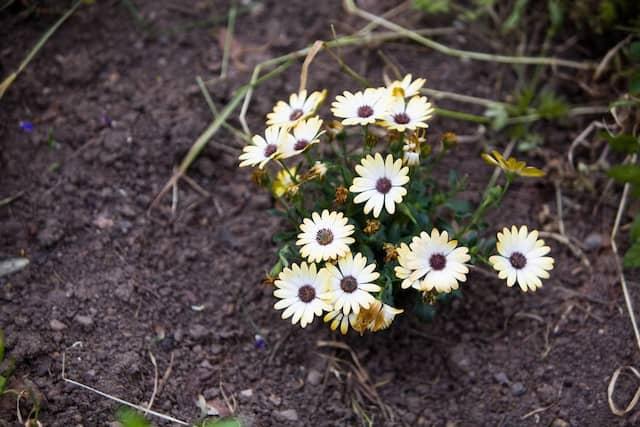 Was wächst wo? In Frankfurt können Bürger auf einer Website eintragen, welche Pflanzen sie im Stadtgebiet finden.